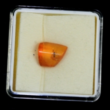Baltic yellow amber specimen with inclusion